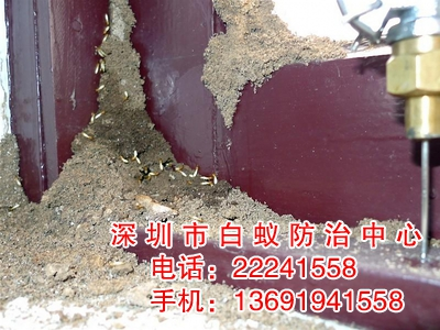 白蚁对人类的危害损失是惊人的-深圳白蚁防治中心,白蚁防治,装图片